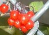 got your cherries