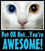 Pet or not...you rock!!!
