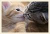 A Kitten Kiss