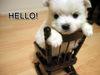 *Hello*