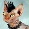 Non-conformist Kitty