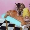a pets massage