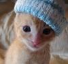 Miki's Kitty