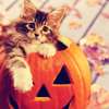 ** You are my pumpkin **