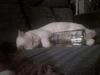 A drunk pet for your pet!