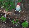 Protective Garden Gnome!