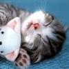 Kitty Hug!