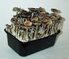 Box of Magic Mushroom