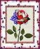 Patriotic Rose USA