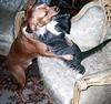 Pet Hug :)
