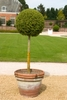 A Ball Topiary for U