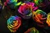 Chernobyl roses
