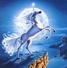 A White Unicorn