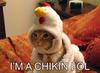 I'M A CHICKEN!