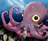 Gus the Pet Octopus