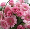 ♥ Pink Flowers