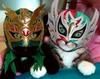 Lucha kittens