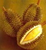DURIAN Natural APHRODISIAC