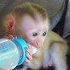 a pet monkey