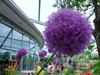 A giant purple flower of doom!